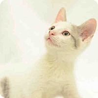 Adopt A Pet :: Alex - St. Cloud, FL