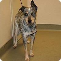 Adopt A Pet :: Fenrir - Wildomar, CA