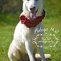 Adopt A Pet :: Snow White - Fort Valley, GA