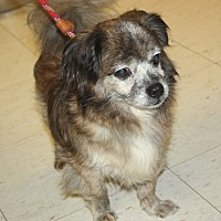 Adopt A Pet :: Elf - available 7/23 - Sparta, NJ