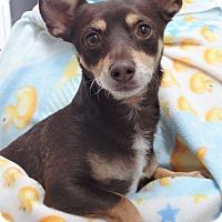 Adopt A Pet :: RUDY - Inland Empire, CA