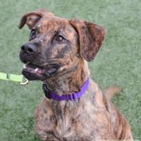 Adopt A Pet :: Caramel - Cleveland, OH