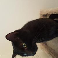 Adopt A Pet :: Ringo - Pittsburgh, PA