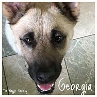 German Shepherd Dog/Shepherd (Unknown Type) Mix Dog for adoption in Wilson, North Carolina - Georgia