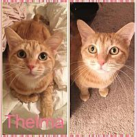 Adopt A Pet :: Thelma - Covington, KY