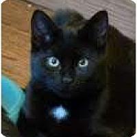 Adopt A Pet :: Jasper - Fredericton, NB