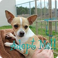 Adopt A Pet :: Peaches - Kempner, TX