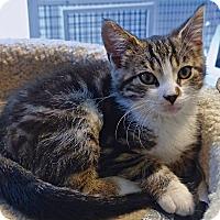 Adopt A Pet :: Leo - Victor, NY