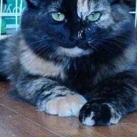 Adopt A Pet :: EMMA KAT - Des Moines, IA