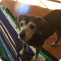 Adopt A Pet :: Camille - Knoxville, TN