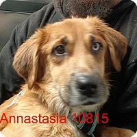 Adopt A Pet :: Annastasia - Greencastle, NC