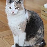 Adopt A Pet :: KERI - Bainsville, ON