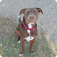 Adopt A Pet :: Buford - Las Cruces, NM