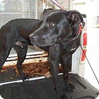 Adopt A Pet :: Austin - Newnan City, GA