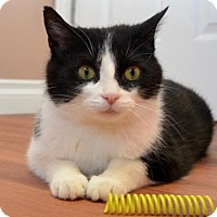 Adopt A Pet :: Angel - Richmond Hill, ON