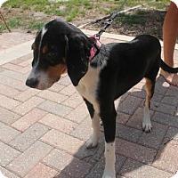 Adopt A Pet :: Gia - Jacksonville, FL