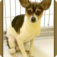 Adopt A Pet :: Peanut Tyke 27988 - Pampa, TX