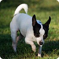 Adopt A Pet :: Ootsie - Glastonbury, CT