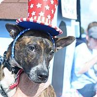 Whippet Mix Dog for adoption in Hanover, Pennsylvania - Milkbone