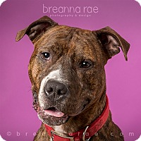 Adopt A Pet :: Clara - Sheboygan, WI