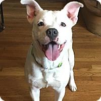 Adopt A Pet :: Lily - Beachwood, OH