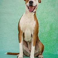 Adopt A Pet :: Elodie - St Louis, MO