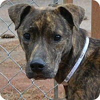 Adopt A Pet :: Treat - Athens, GA