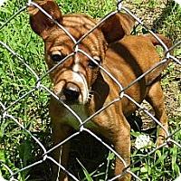 Adopt A Pet :: Jenny - Bel Air, MD