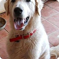 Adopt A Pet :: Reagan - dewey, AZ