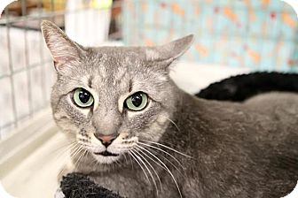 Domestic Shorthair Cat for adoption in Yorba Linda, California - Thelma