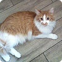 Adopt A Pet :: Bosco - Los Angeles, CA