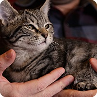 Adopt A Pet :: Rumbles - St. Louis, MO