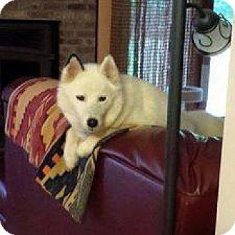 Siberian Husky Mix Dog for adoption in Shallotte, North Carolina - Chelsea