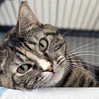 Adopt A Pet :: Emma - St Louis, MO