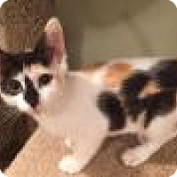 Adopt A Pet :: Francis - East Hanover, NJ