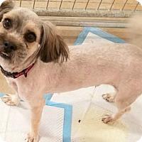Adopt A Pet :: Zeke-ADOPTION PENDING - Boulder, CO