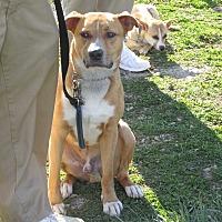 Adopt A Pet :: RAMSEY - LaGrange, KY