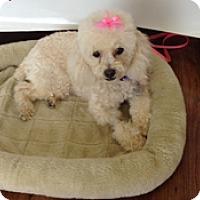 Adopt A Pet :: DORIE - Melbourne, FL