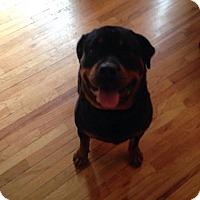 Adopt A Pet :: Kahla - Rexford, NY
