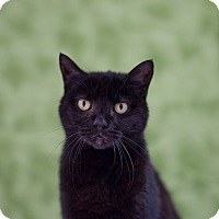 Adopt A Pet :: Barnaby - Houston, TX