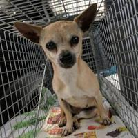Adopt A Pet :: Esmaralda - Denver, CO