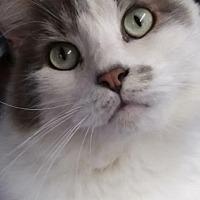 Adopt A Pet :: Spencer - Lambertville, NJ