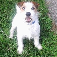 Adopt A Pet :: Rocky - Rochester, MN