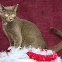 Adopt A Pet :: Nani - Bristol, IN