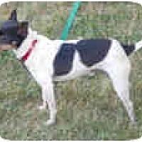 Adopt A Pet :: Jasper Harlan - Carmel, IN