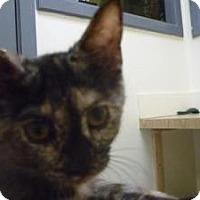 Adopt A Pet :: Uniqua - Milwaukee, WI
