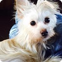 Adopt A Pet :: *Crispin - PENDING - Westport, CT