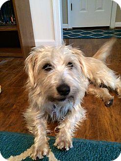 Terrier (Unknown Type, Medium) Mix Dog for adoption in Richmond, Virginia - Jon Bone