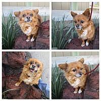 Adopt A Pet :: Tabitha - Shawnee Mission, KS