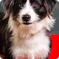 Adopt A Pet :: Parker - Owensboro, KY